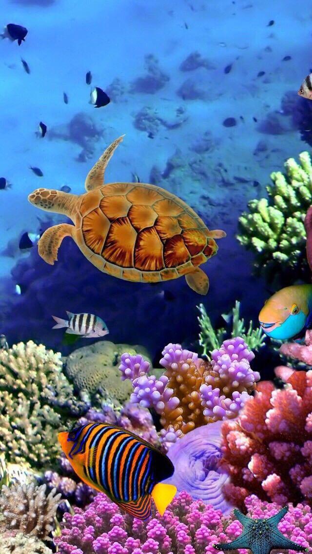 The Wonders Of The Sea Underwater Wallpaper Fish Wallpaper