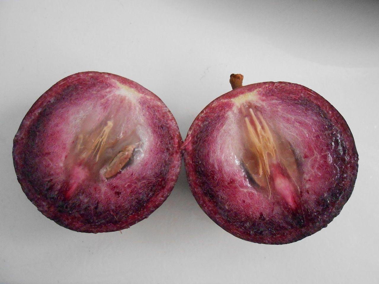 Chrysophyllum Cainito / Kenitu / Sawo Duren / Star Apple