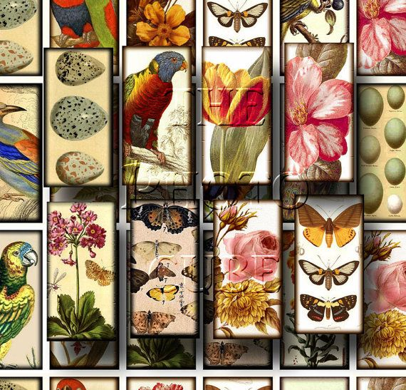BiRDs BuTTeRfLiEs FLoWeRs Fun 1x2 vintage Altered by thephotocube