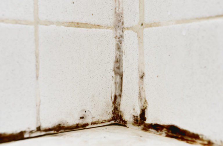 Removing Black Mould From Bathroom Tiles