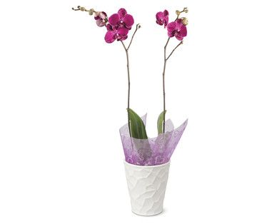 5 Easy Orchid 10 This Week At Aldi For Valentine S 400 x 300