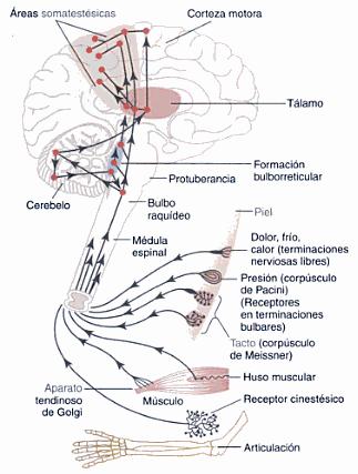 Procesamiento de la información y memoria   Medicina   Pinterest