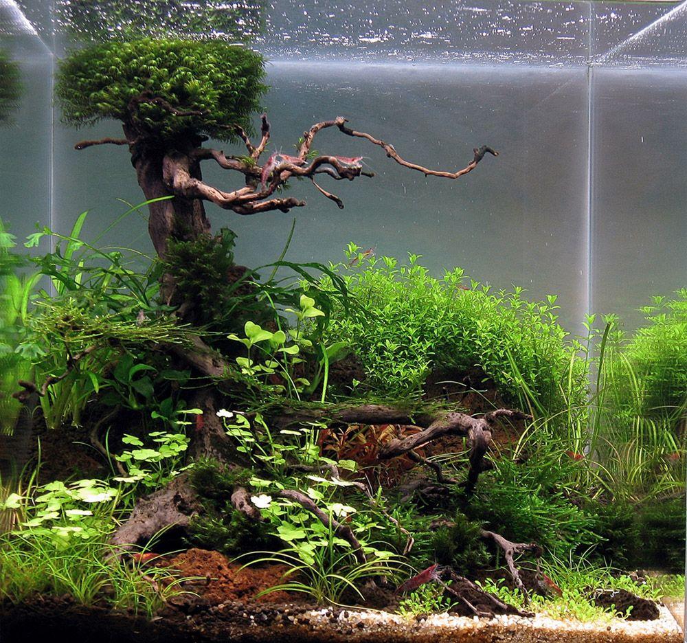 Planted aquarium design contest 2013 results of members - Petit aquarium design ...