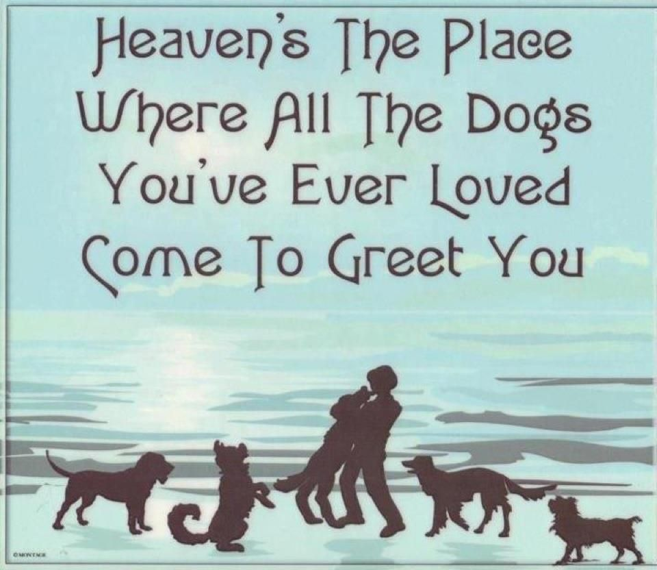 Heaven All Dogs Go To Heaven Dog Heaven Dog Quotes I Love