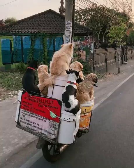 24 paws, 1 Scooter 24 paws, 1 Scooter