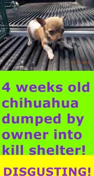 Be70607a902c9c512bc40c20842593bd Jpg 320 597 Pixels Save Animals Dog Adoption