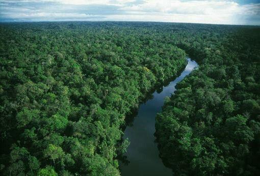 Rainforest, Surinam