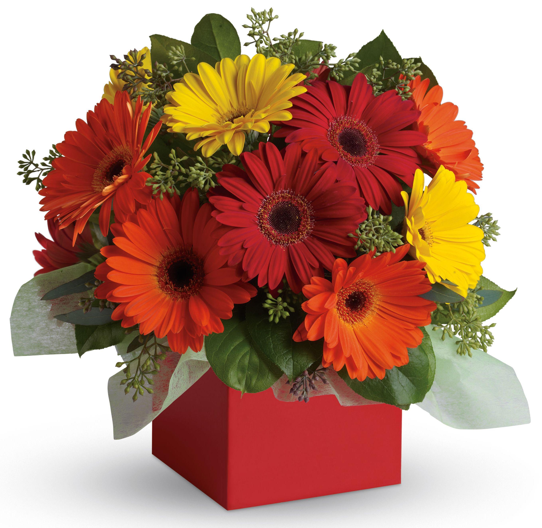 A34 Glorious Gerberas Brighten Their Day With This Exuberant Burst Of Beauty Joyful Flower Delivery Flower Arrangements Fresh Flowers Arrangements