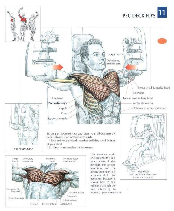 ANATOMY OF A WORKOUT - CHEST Workout | Gym Shizzle | Pinterest ...