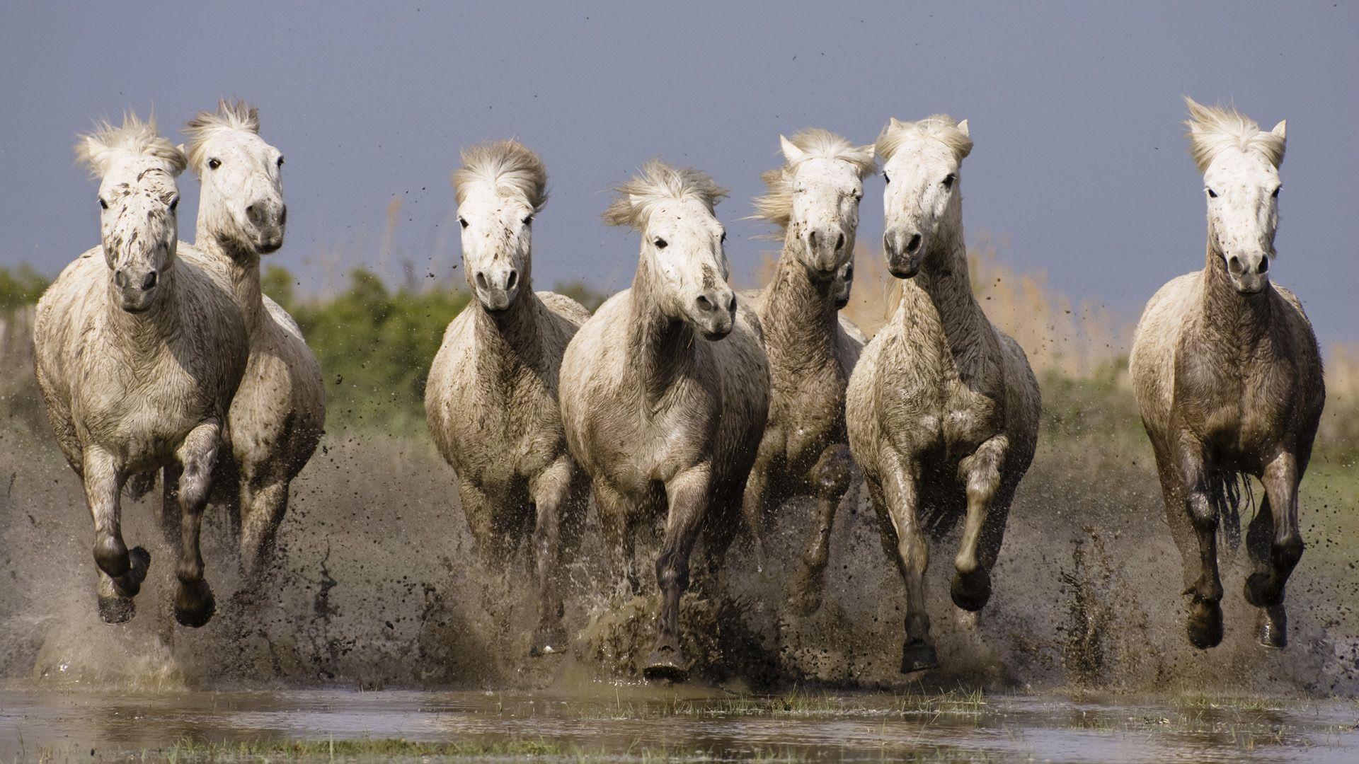 Cavalos na Lama