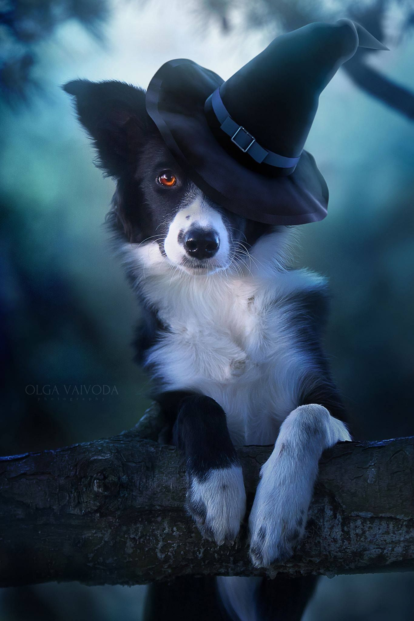 Pin by Sarah Smallwood on Dogs Day Dog halloween, Puppy
