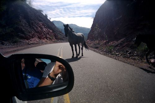 Argentina:  A horse in the road. {I've seen this, south of Yakima, WA}