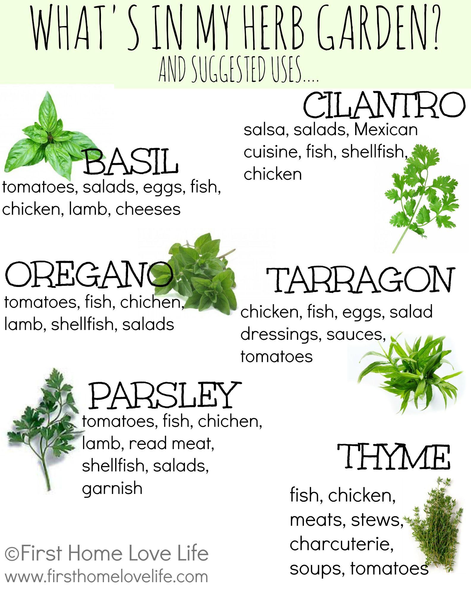 Creating a Kitchen Herb Garden