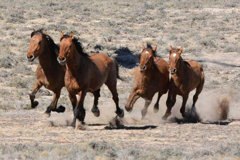 GREEN DREAMS BLM Caught Between a Rock and a Horse Place Wild - free horse bill of sale