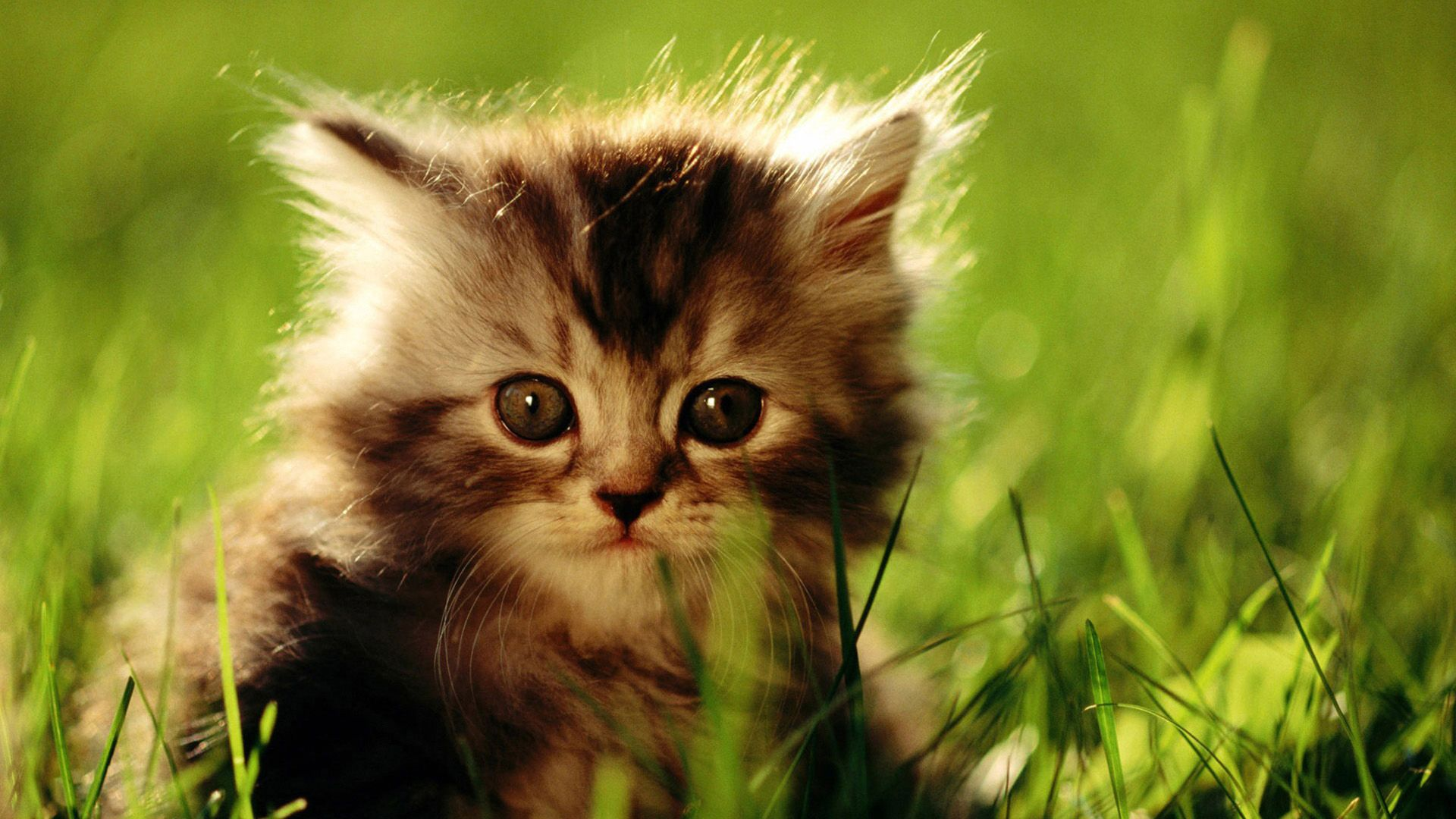 Фото животных котят скайп