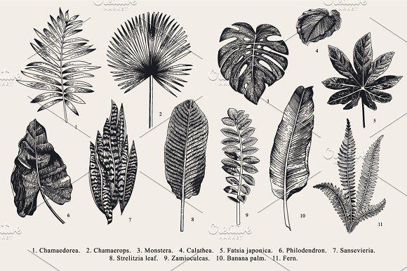Exotic leaves. B & W by olga.korneeva on @creativemarket ...