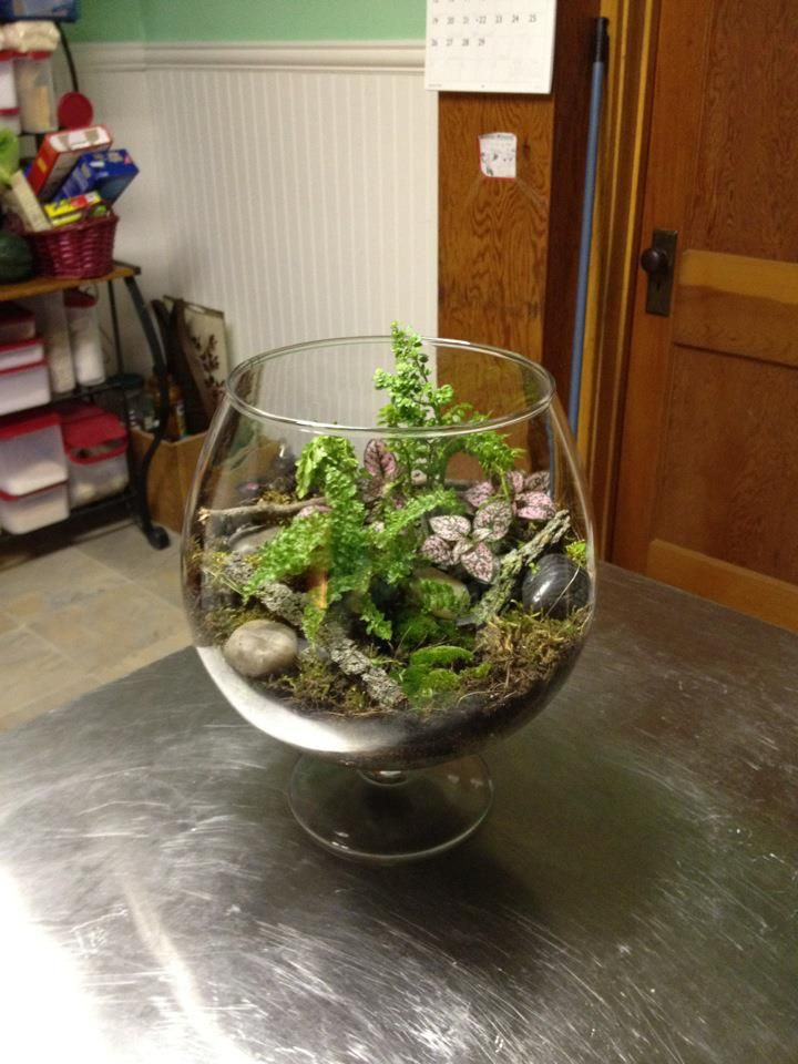The terrarium I made at Affinity.  It's my first, so be nice!