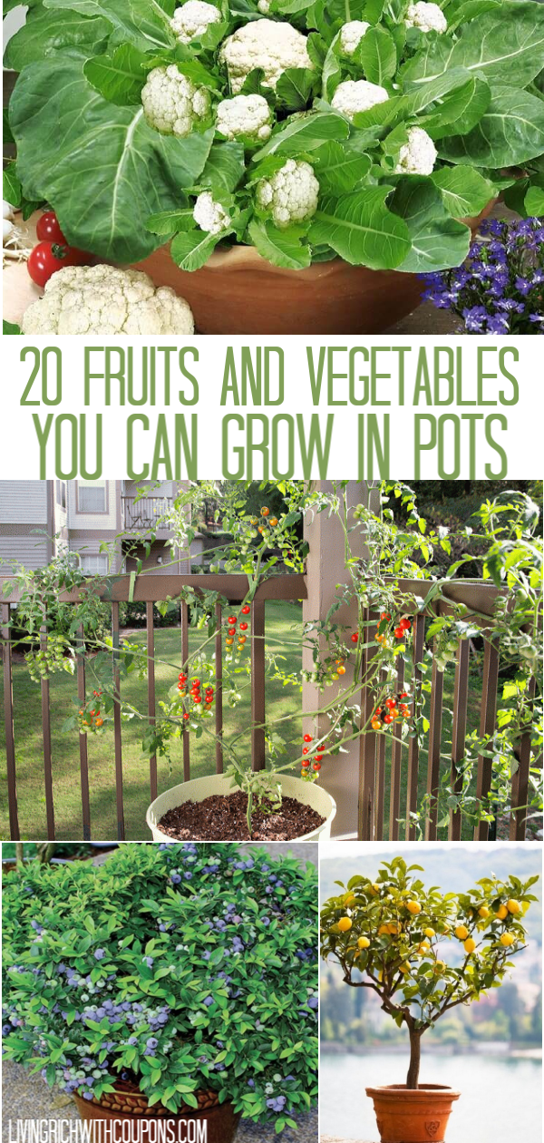 20 Fruits And Vegetables You Can Grow In Pots Growing Vegetables Container Gardening Vegetables Outdoor Plants