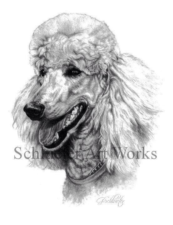 98d296dcbac5 Dog Sketch Pet Portrait 8x10 Standard Poodle by gensart on Etsy https://www