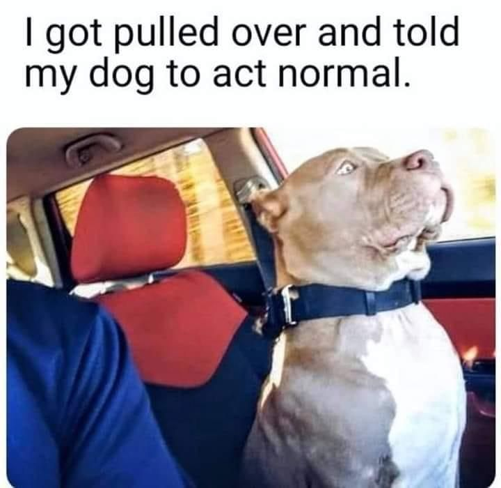 Play It Cool Dogs Funny Animal Jokes Funny Animal Memes Funny Memes