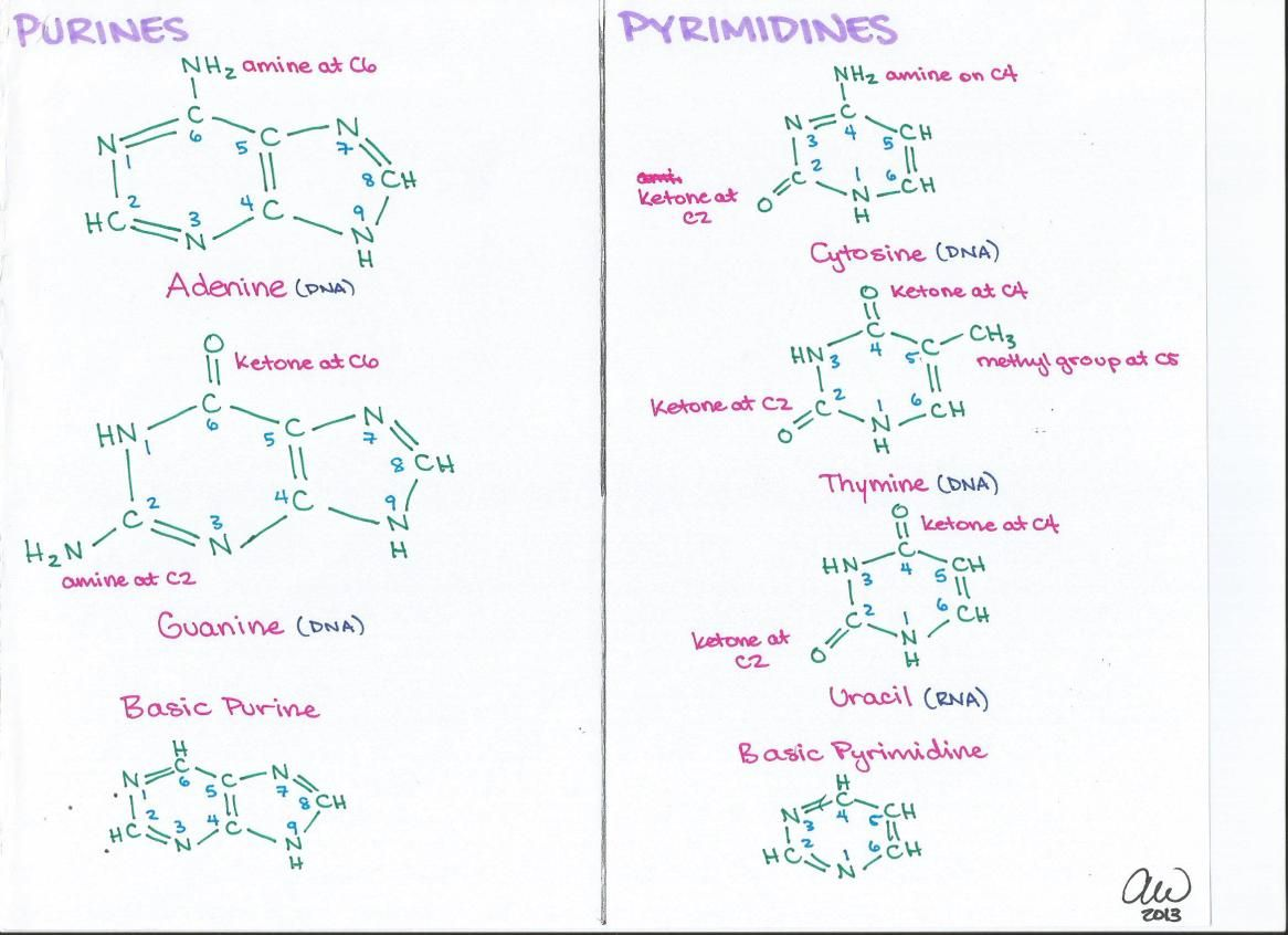Biochemistry Study Guides With Images