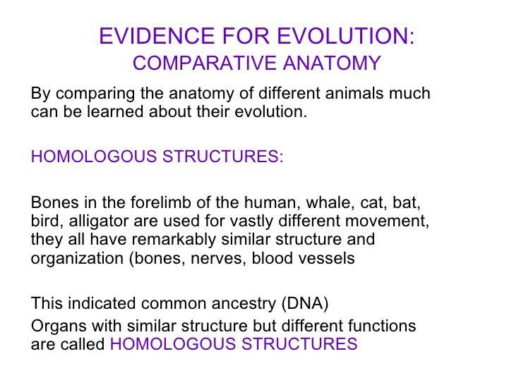 Comparative Anatomy Worksheet - worksheet