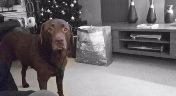 Has Santa been??