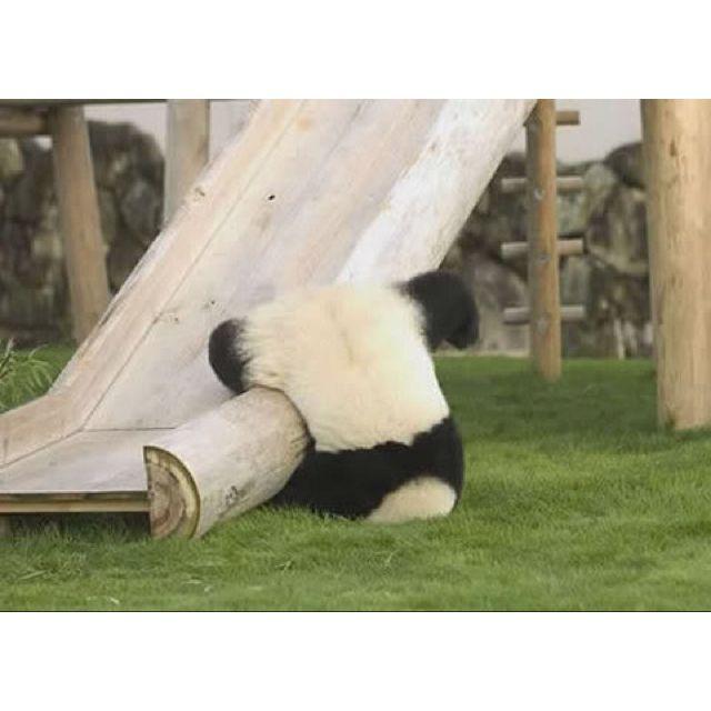 Panda slide! :)
