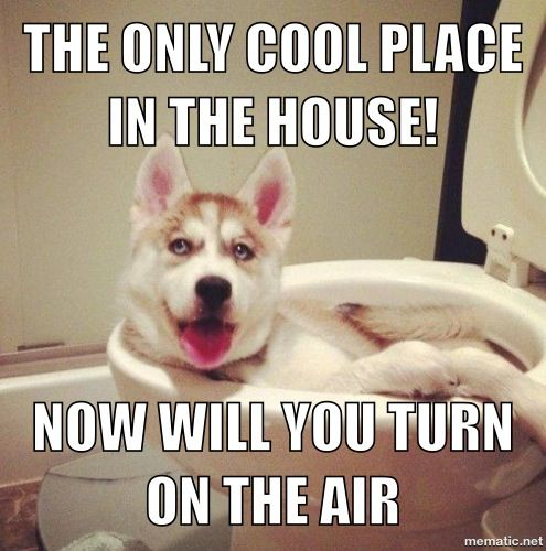 My Newest Meme For This Hot Day Memes Funny Animals