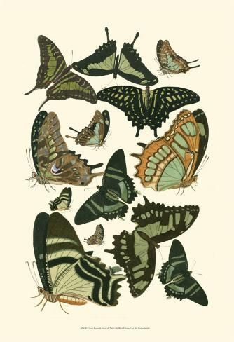 size: 19x13in Art Print: Green Butterfly Study Wall Art : Entertainment This art print displays sharp, vivid images with a high degree of color accuracy. A member of the versatile family of art prints, this high-quality reproduction represents the best of both worlds: quality and affordability. Art prints are created using a digital or offset lithography press.