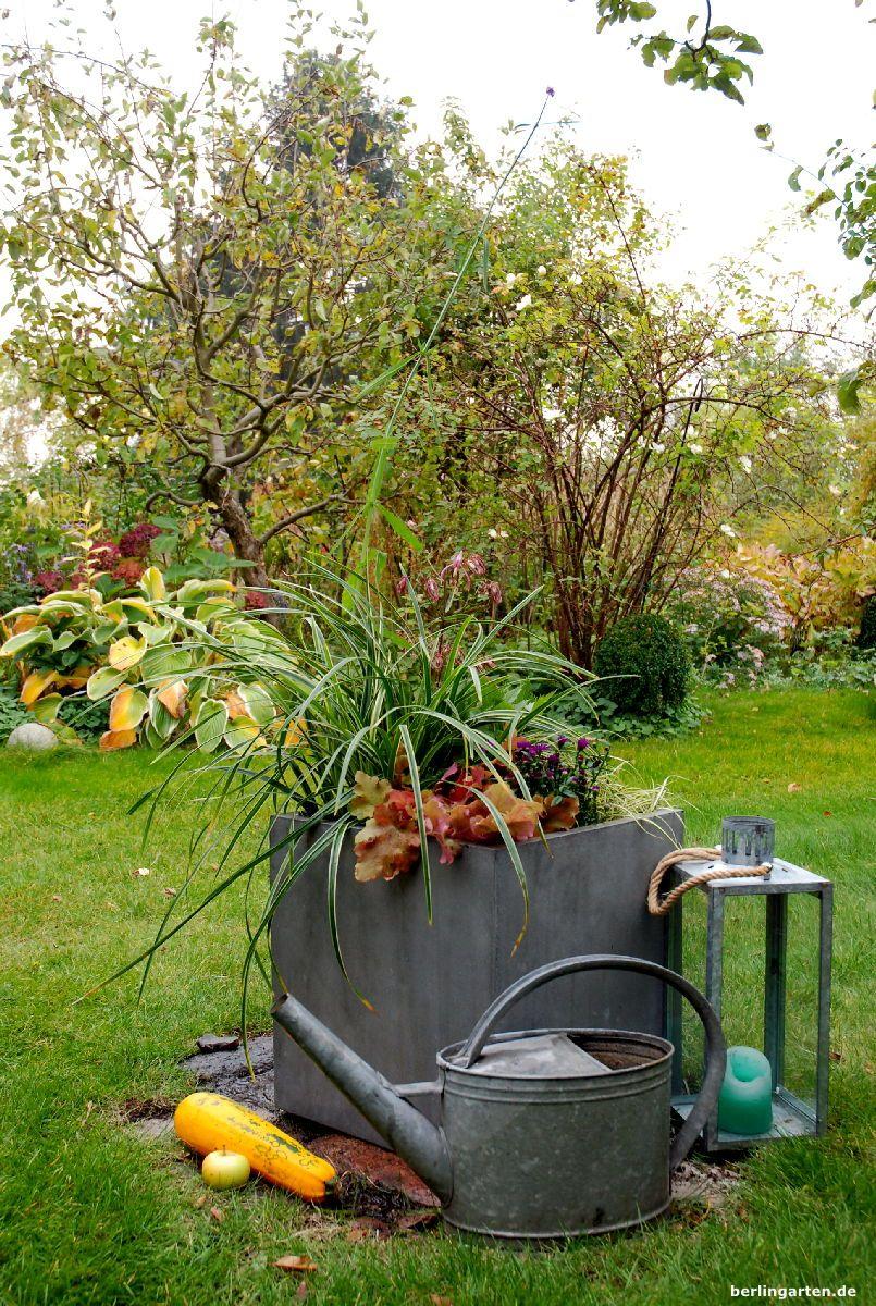 ganzjaehrig schoener kuebel   Bepflanzung, Kübelpflanzen, Garten