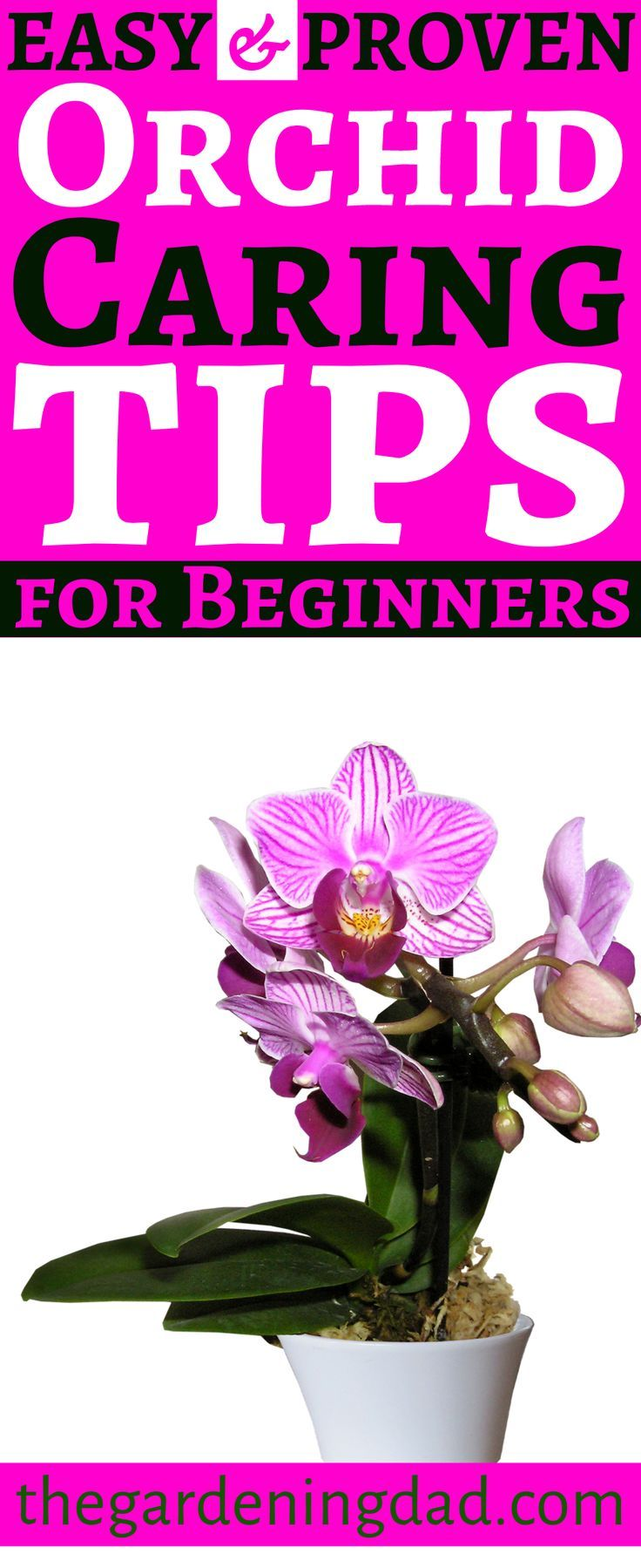 Photo of How to Care for Orchids: 10 EASY & PROVEN Tips – The Gardening Dad