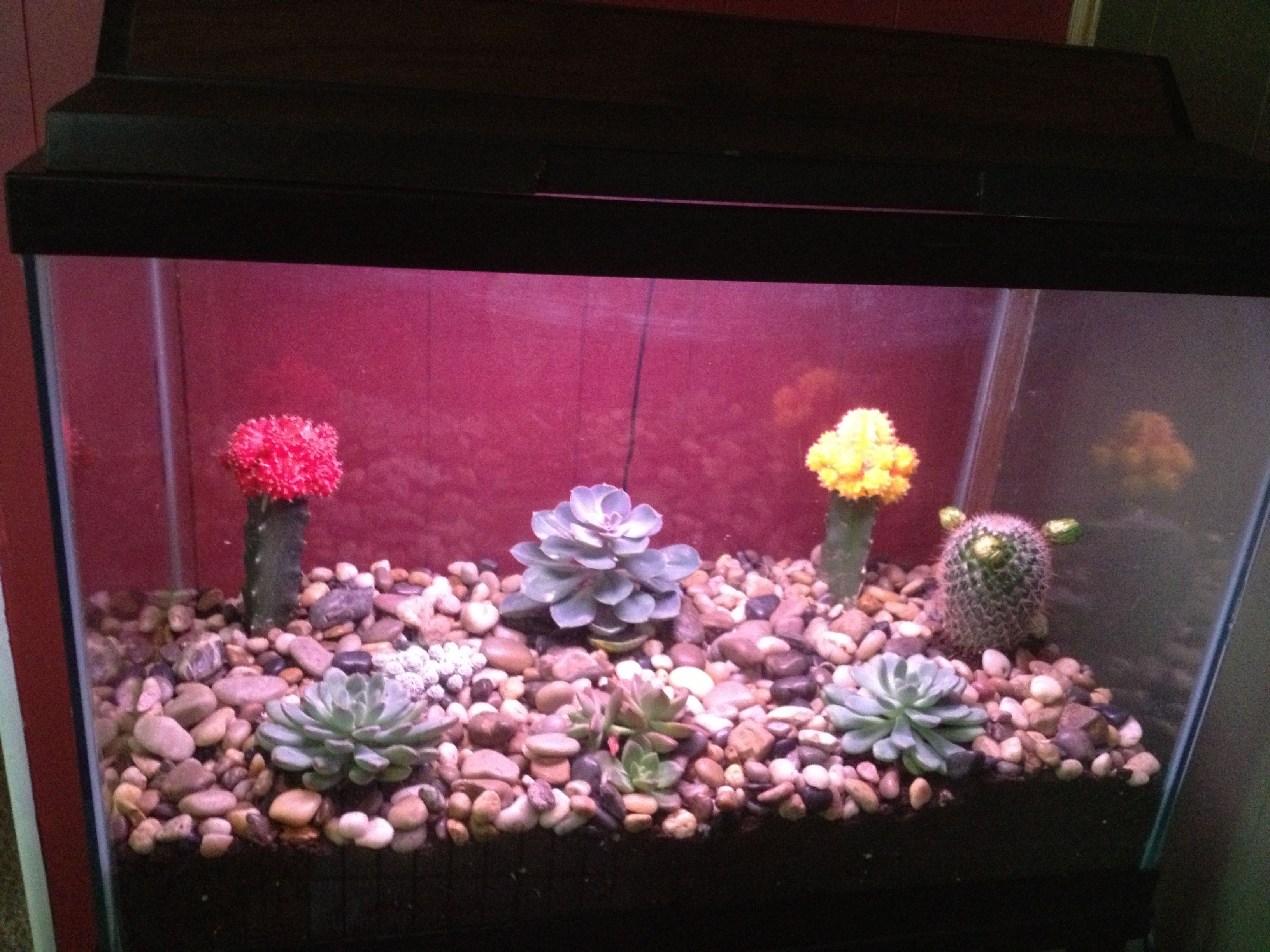 Use an old fish aquarium to plant an indoor rock garden cover base