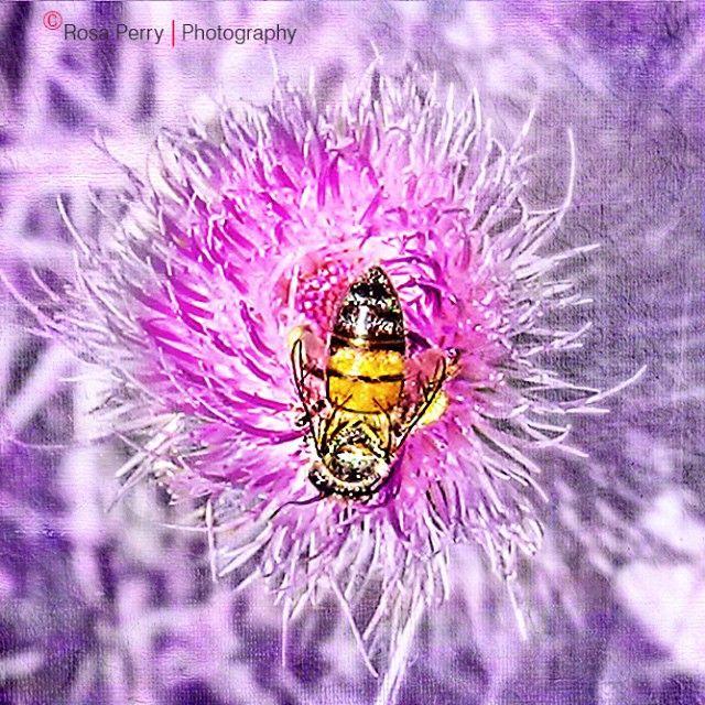In the Garden - #garden #brissie #aussie #aussiesummer #digidesignzbyrosa #art #iphoneography #iphoto #mobile #textures #DistressedFX