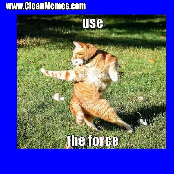 Best Cat Memes Ever Clean