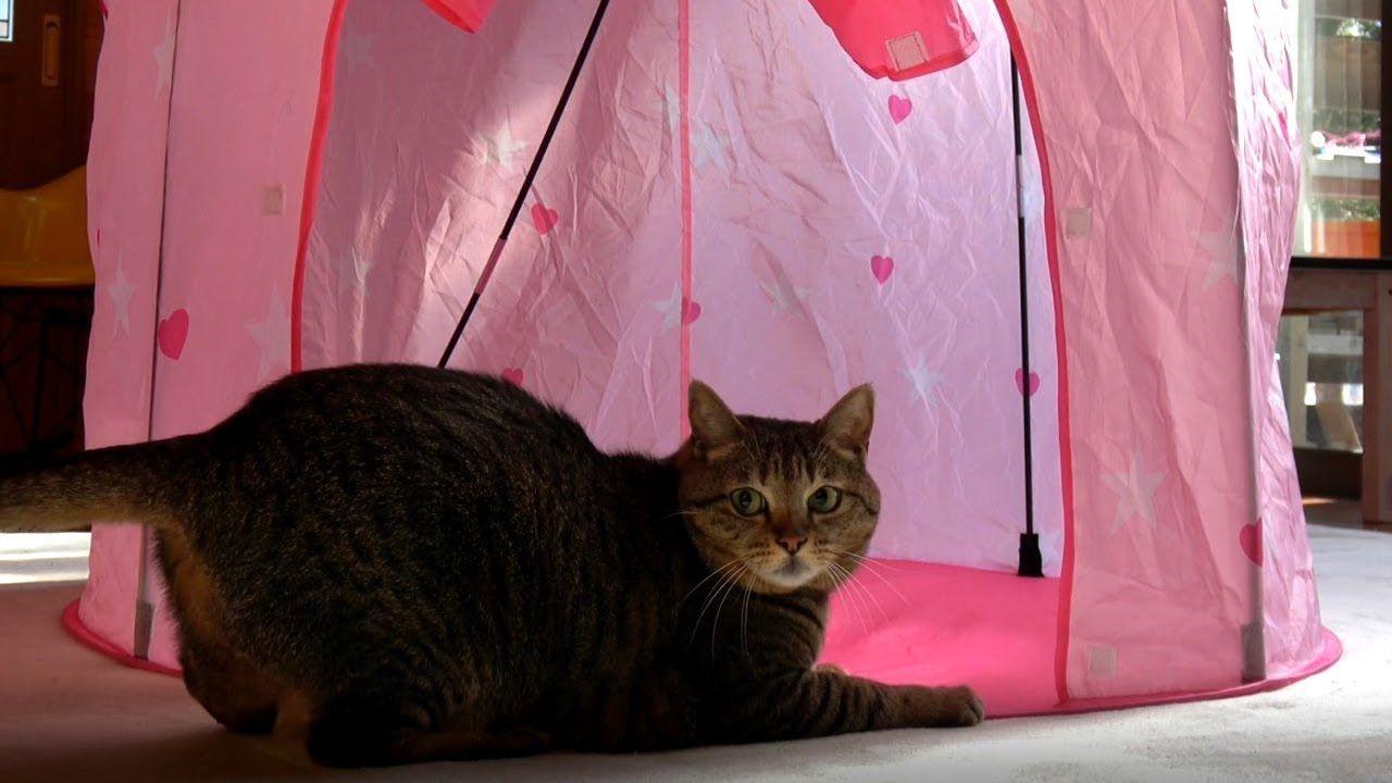 ピンクテントとはな the pink tent and hana テント ピンク