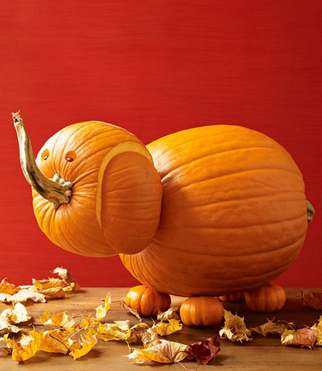 Make An Elephant Pumpkin With This Tutorial