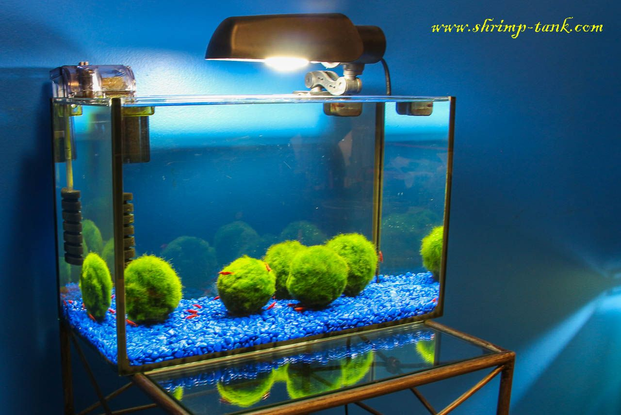 Image Result For Freshwater Shrimp Tank Beautiful Vivs Pinterest Fisiden Moss Lempeng Tanaman Air Aquascape Super
