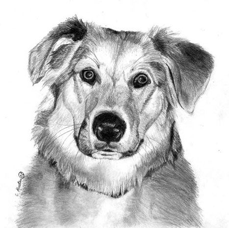 How to draw a dog free graphite pencil art lesson
