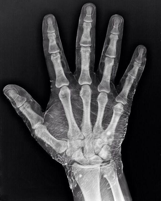 Pin de Maite en metges | Pinterest | Anatomía, Medicina y Iniciales