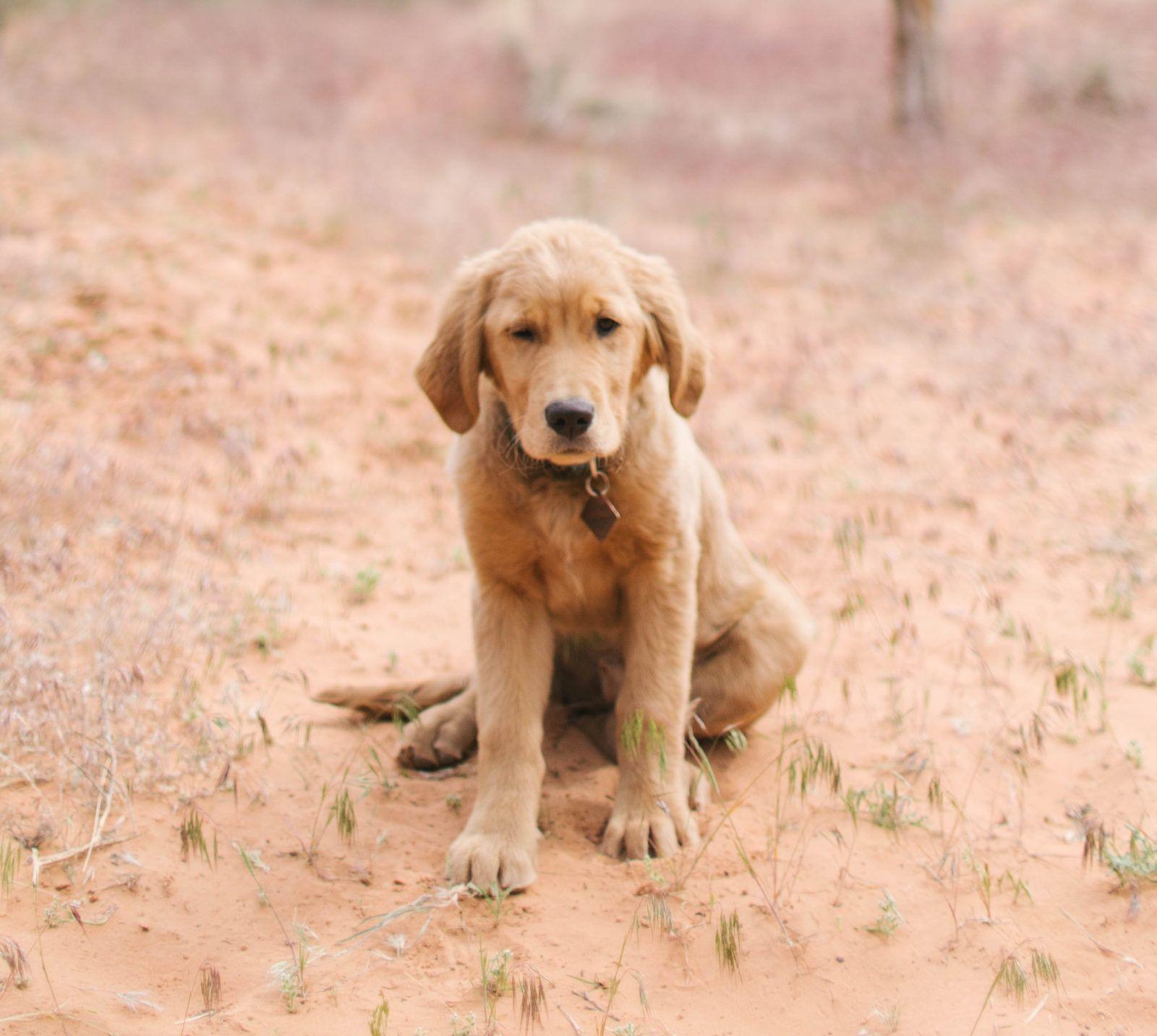 Dog Friendly Hikes In Moab Utah Caroline Bauer Photography