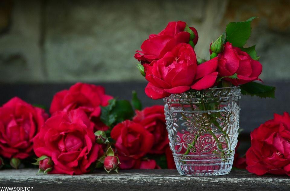 خلفيات ورد جوري احدث صور ورد الجوري 2018 Beautiful Roses Orange Roses Red Roses