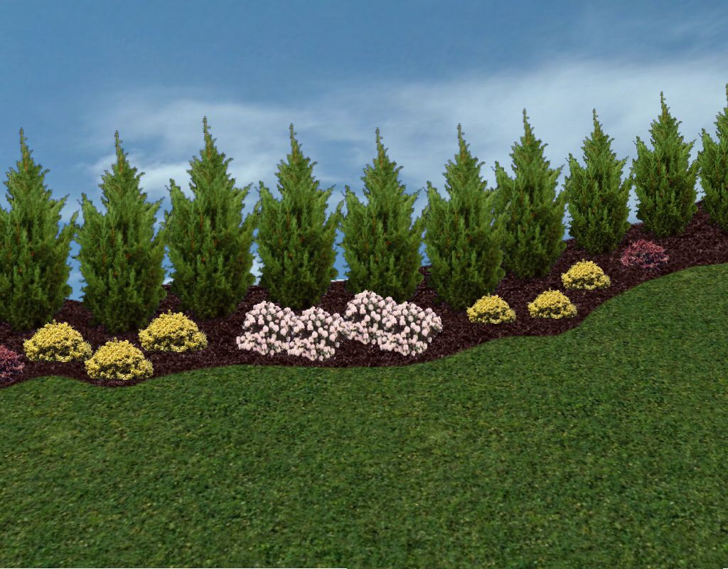 Privacy landscaping trees privacy trees and hedges in for Tree landscaping ideas