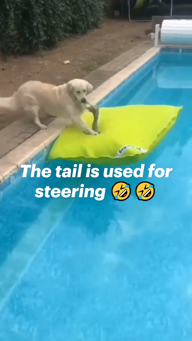 The tail is used for steering 🤣🤣
