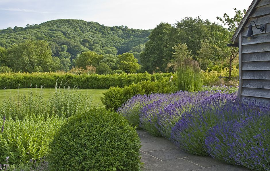 Sinuous lines of box hedging and bold swathes of perennial planting ...