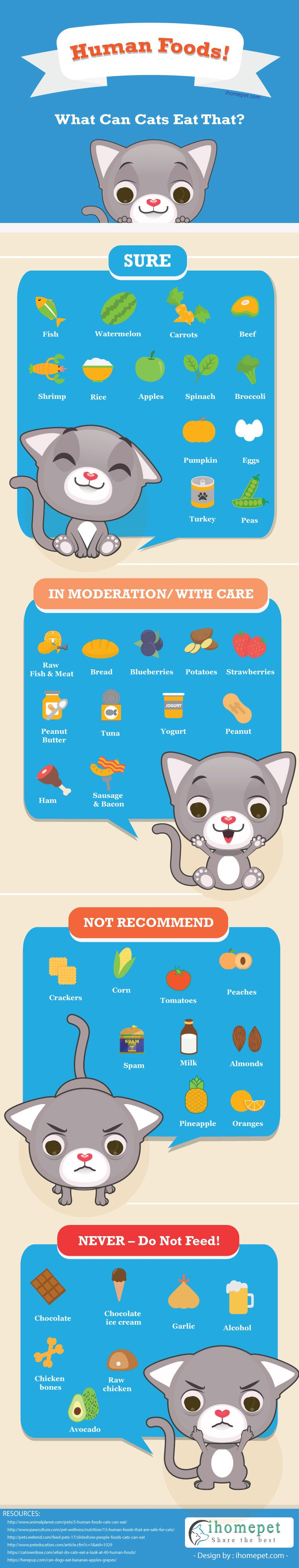 What Can Cats Eat Besides Cat Food Foods cats can eat