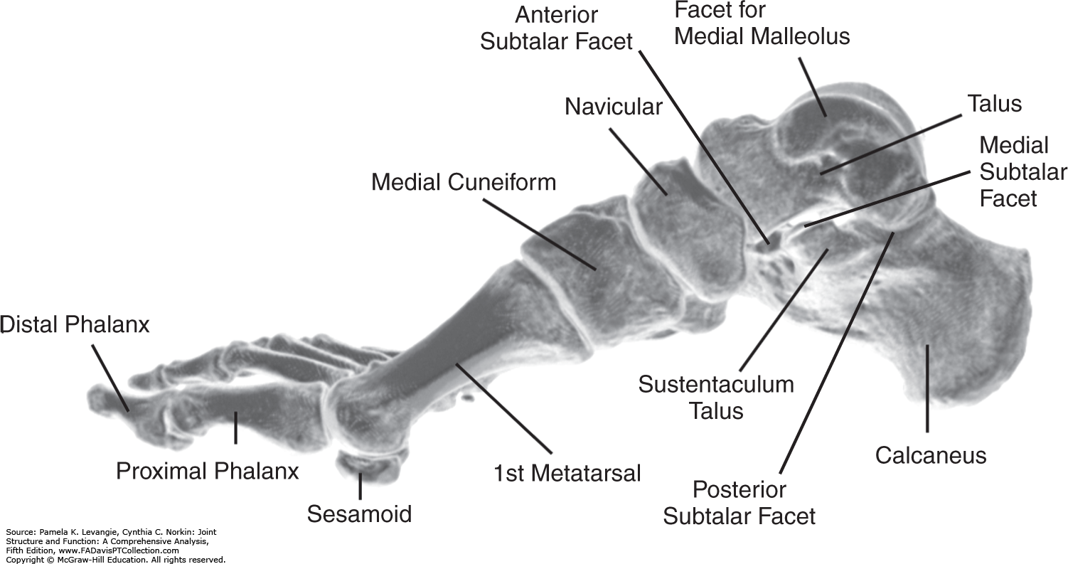 subtalar joint」的圖片搜尋結果 | foot anatomy | Pinterest | Foot anatomy