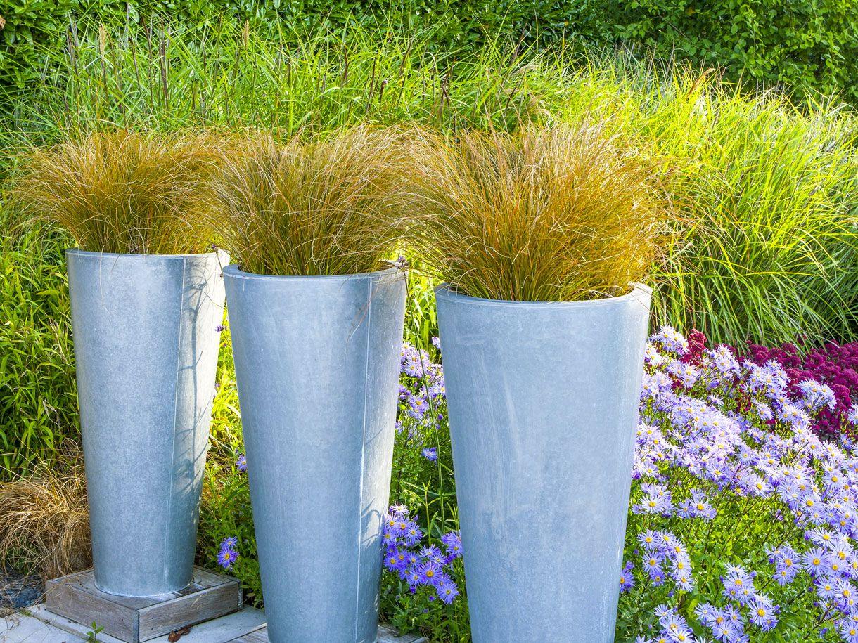Carex comment les cultiver et les diviser Graminées