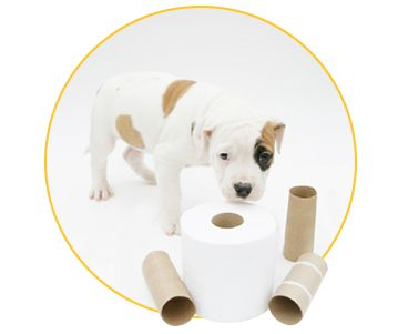 How To Toilet Train Your Puppy Training your puppy