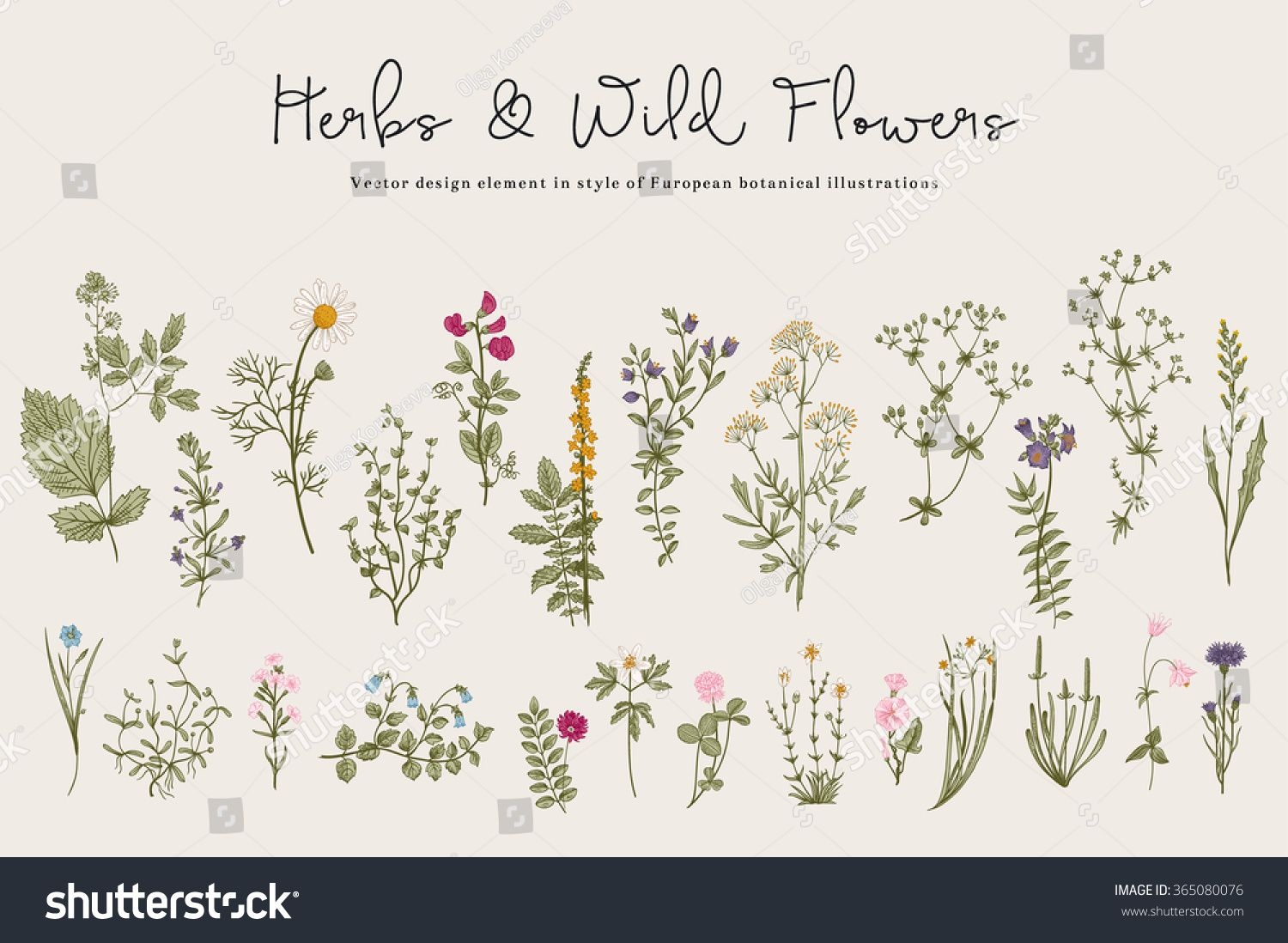 Herbs And Wild Flowers Botany Set Vintage Flowers Colorful Illustration In The Style Of Engravings Wildflower Drawing Vintage Flower Tattoo Wild Flowers